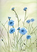 Flower Garden Drawings Prints - Cornflowers Print by Eva Ason