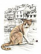 Coloured Pencil Prints - Cornish Cat Print by Johanna Pieterman