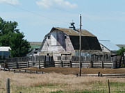 Barn Lots Framed Prints - Corrals and barn in ND Framed Print by Bobbylee Farrier