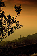 Tuscan Sunset Prints - Cortona Sunset Print by Al Hurley