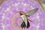 Asymmetrical Digital Art Prints - Cosmetic Hummingbird Prince Print by Gregory Scott