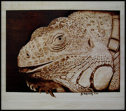 Pet Pyrography Framed Prints - Cosmo Framed Print by Jo Schwartz