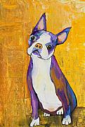 Pet Portraits Paintings - Cosmo by Pat Saunders-White