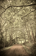 Fantasy Tree Art Prints - Cosy Path Print by Svetlana Sewell