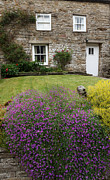 Charming Cottage Posters - Cottage in Wensleydale Poster by Louise Heusinkveld