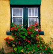 Colored Facades Posters - Cottage Window, Co Antrim, Ireland Poster by The Irish Image Collection