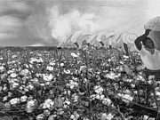 Slaves Digital Art Posters - Cotton Field Poster by Belinda Threeths