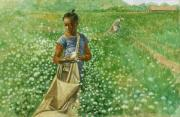 African-american Paintings - Cotton field by Robert Casilla