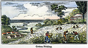 Cotton Picking Posters - COTTON PLANTATION, 19th C Poster by Granger