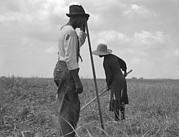 Blacks Posters - Cotton Sharecroppers Weeding Poster by Everett