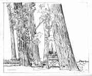 Ink Drawing Drawings Posters - Cotton Woods Creve Coeur Path Poster by John Lautermilch