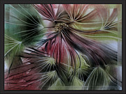 Umbrella Pastels Framed Prints - CottonseedB 2010  Framed Print by Glenn Bautista