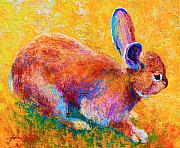 Rabbit Metal Prints - Cottontail II Metal Print by Marion Rose
