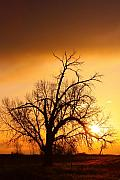 Colorful Framed Prints - Cottonwood Sunrise - Vertical print Framed Print by James Bo Insogna