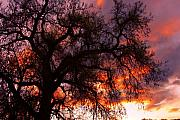 James Bo Insogna Prints - Cottonwood Sunset Silhouette Print by James Bo Insogna