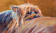 Yorkshire Terrier Art Framed Prints - Couch Potato Framed Print by Kimberly Santini