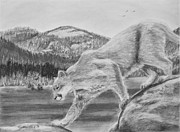 Panther Drawings - Cougar 2 by Heather Ward