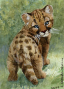 Wild Mixed Media Posters - Cougar Cub aceo Poster by Svetlana Ledneva-Schukina