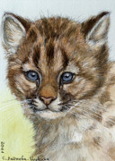 Pussy Mixed Media Framed Prints - Cougar Cub Portrait aceo Framed Print by Svetlana Ledneva-Schukina