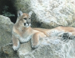 Gray Cat Paintings - Cougar Haven by Carla Kurt