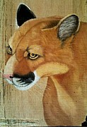 Mountain Lion Paintings - Cougar Head by Debbie LaFrance
