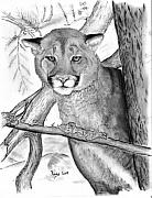 Cats Drawings Originals - Cougar in Tree by Russ  Smith