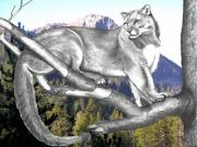 Manipulation Drawings Framed Prints - Cougar Mountain Framed Print by Russ  Smith