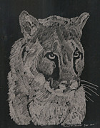 Cougar Print by Robert Clement