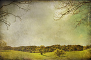 Oak Trees Prints - Count On Me Print by Laurie Search