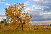 Hay Photos - Country Autumn Landscape by James Bo Insogna