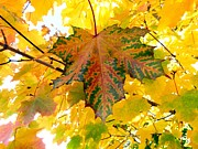 Fall Leaves Prints - Country Color 21 Print by Will Borden