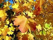 Fall Leaves Prints - Country Color 27 Print by Will Borden