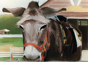 Donkey Pastels Framed Prints - Country Companion Framed Print by Barbara Gulotta