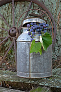 Concord Metal Prints - Country Concord Grapes Metal Print by Maria Dryfhout
