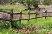 Sycamore Grove Park Prints - Country Fence Print by Carol Groenen