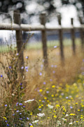 Gate Prints - Country Fence Print by Rebecca Cozart