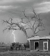 Lightning Bolt Pictures Prints - Country Horses Lightning Storm NE Boulder County CO 66V BW Print by James Bo Insogna