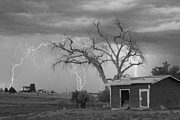 Lighning Prints - Country Horses Lightning Storm NE Boulder County CO  76BW Print by James Bo Insogna
