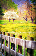 Fence Line Prints - Country Kind of Spring Print by Darren Fisher