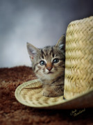Kitty Cat Prints - Country Kitten Print by Judi Quelland