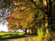 Beech Prints - Country lane in deepest rural Hampshire Print by Alex Cassels
