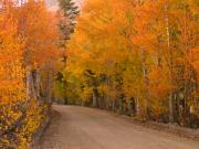 Sierras Prints - Country Lane Print by Mark Wilburn