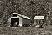 Shed Posters - Country Life sepia Poster by Steve Harrington
