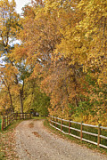 Country Dirt Roads Prints - Country Ranch Road Autumn Portrait Print by James Bo Insogna