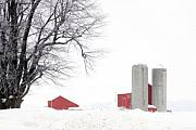 Cathy  Beharriell - Country Red and White