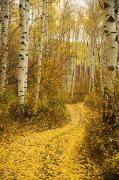 Northern Colorado Photo Prints - Country Road and Aspens 1 Print by Ron Dahlquist - Printscapes