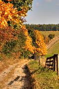 Autumn Landscape Art - Country Road And Autumn Landscape by Michal Boubin
