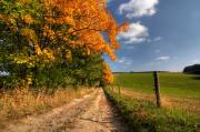 Fall Road Posters - Country Road And Autumn Trees Poster by Michal Boubin