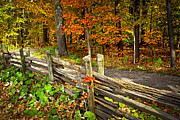 Wooden Fence Framed Prints - Country road in autumn forest Framed Print by Elena Elisseeva
