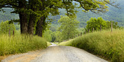 Park Scene Posters - Country Road in the Smokies Poster by Andrew Soundarajan